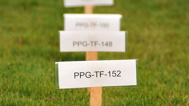 Photo Of Turfgr Trial Evaluation Plots